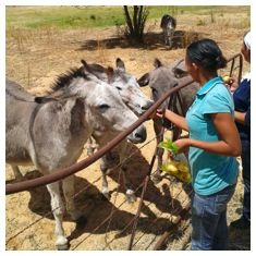Visitors feeding donkeys in the sanctuary.