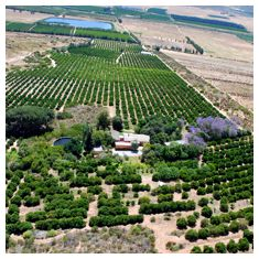 Aerial view of the orchards on Modderfontein.